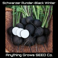 Radish - Schwarzer - Black Winter  - Organic